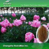 Extrait blanc naturel de racine de dahlia de 100%