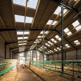 Costruzione prefabbricata del bestiame della struttura d'acciaio con il basso costo