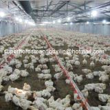 Broiler를 위한 가득 차있는 Set Automatic Poultry Farm Equipments