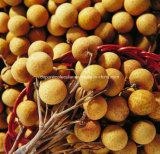 中国幸福感のLonganのエキスまたはDimocarpusのLonganのエキスのLonganのエキスで作られる
