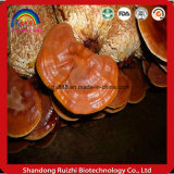 Ganoderma Lucidum 조각 도매 GMP 제조자 모든 자격이 된 주요 자료