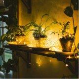 Tester leggiadramente caldo 50 LED 3 aa dell'indicatore luminoso 5 della stringa di bianco LED a pile