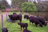 Sailin galvanisierte Bauernhof-Huhn-Draht