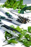 Le jardin Scissors le chevêtre de jardin des cisaillements d'émerillon d'herbe d'acier inoxydable de 360 degrés