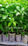 Tela não tecida dos Ss Spunbond para plantar o saco verde