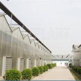 Invernadero de la hoja de la PC para el crecimiento de Agricutural