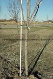 Estaca de grande resistência da planta, estaca do jardim, fibra de vidro Rods&Stake