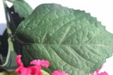 Preiswerte Silk künstliche Blumenhydrangea-Fälschungs-Blumen für Haupthochzeits-Grossisten