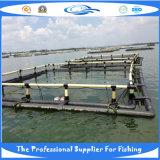 Gabbia quadrata dei pesci (DSC00296)