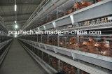 Клетка цыпленка слоя птицефермы в Afraic