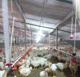 アフリカの大きい計画の養鶏場のローカル家
