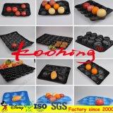 Plateau de empaquetage de fruit frais de la tomate PP/PVC de noir de la qualité 29*49