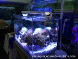 indicatore luminoso del serbatoio dell'acquario di 18W Dimmable LED con Romet o il tasto