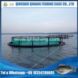 Os peixes prendem a flutuação, tanque da piscicultura em Nigria
