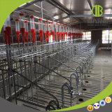 Système alimentant automatique de chaîne durable de porc accueilli par la ferme de porc moderne