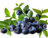 Zubehör-natürliche Kräuterauszug-Heidelbeere-Auszug-Anthocyanin für Anti-Aging
