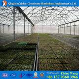 Groene Huis van de Film van de Fabriek van China van kosten het Concurrerende Hydroponic voor Tomaat