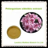 Extracto natural de Sidoides del Pelargonium de la alta calidad