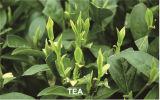 Regolatore Gibberellico Acid -Plant Crescita