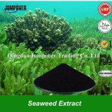 100%の水溶性の海藻エキス