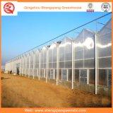 Casa verde da agricultura/passatempo comercial do policarbonato com sistema de ventilação