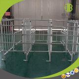 Stalle galvanisée de gestation de matériel de ferme de porc