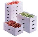 ENV-Maschinen-Frucht-Kasten-Form-formenmaschine