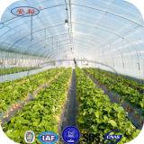 UV recubierto de efecto invernadero de plástico, Green House, Invernadero
