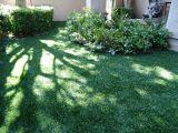 Cortile domestico caldo che modific il terrenoare erba superiore