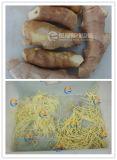 Slicer do gengibre, máquina FC-503/FC-305D do Julienne