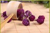Chá da flor do amaranto de globo