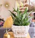 (BC-WF1019)純粋なハンドメイドの自然なヤナギの花のバスケット