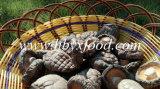 De in het groot Vlotte Paddestoel Shiitake van de Peulvrucht