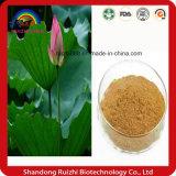 Gewicht-Verlust-Produkt-natürlicher Pflanzenextraktion-Lotos-Blatt Nuciferine Auszug