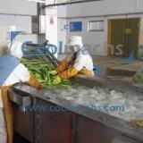 Chaîne de fabrication de séchage végétal d'air chaud