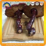 Надувательство гриба Ganoderma Lucidum Basswood одичалое в большом части