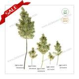 67cm PE 최신 판매 Narture 녹색 크리스마스 나무 스트로부스소나무 분지