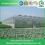 야채와 꽃 성장하고 있는을%s Venlo 싼 유형 유리제 온실
