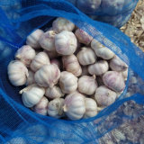 Buon Quality di Fresh cinese Pure White Garlic