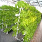 야채 꽃 과일을%s 상업적인 수경법 시스템 온실