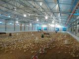 De Faciliteiten & de Apparatuur van het Landbouwbedrijf van het Gevogelte van de Laag van de kip