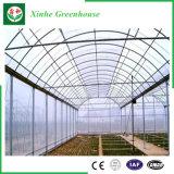 農業のマルチスパンのプラスチック温室