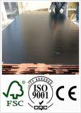 18m m reciclan la base común del álamo de la madera contrachapada del dedo para el encofrado (HBF001)