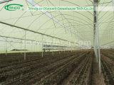 Landbouw van de multi-spanwijdte nam de Serre van de Bloem voor verkoop toe