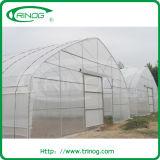 Invernadero económico del túnel para el Seeding