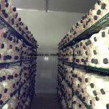 Green Epoxy Coated Wire Metal Mushroom Growing Storage Rack