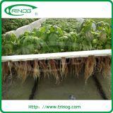 Landwirtschaft Film Greenhouse für den Kopfsalat Wasserkultur