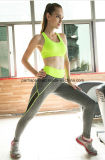 Qualität Schnell-Trockner Ausdehnungs-Eignung-rüttelnde Yoga-Hosen