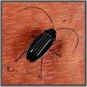 Le cancrelat solaire intellectuel d'insecte de jouet d'énergie solaire badine le jouet/cadeau 056-6