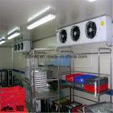 Kaltlagerung, Weg in der Gefriermaschine, Kühlraum